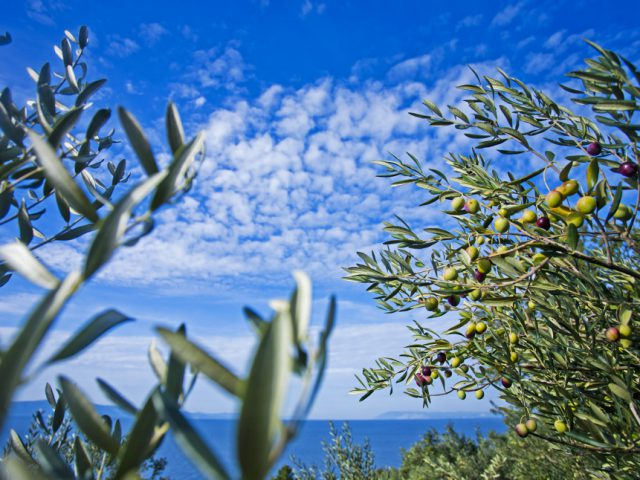 Olive Oil Treatments