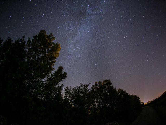 Where Skies Meet the Pintetrees