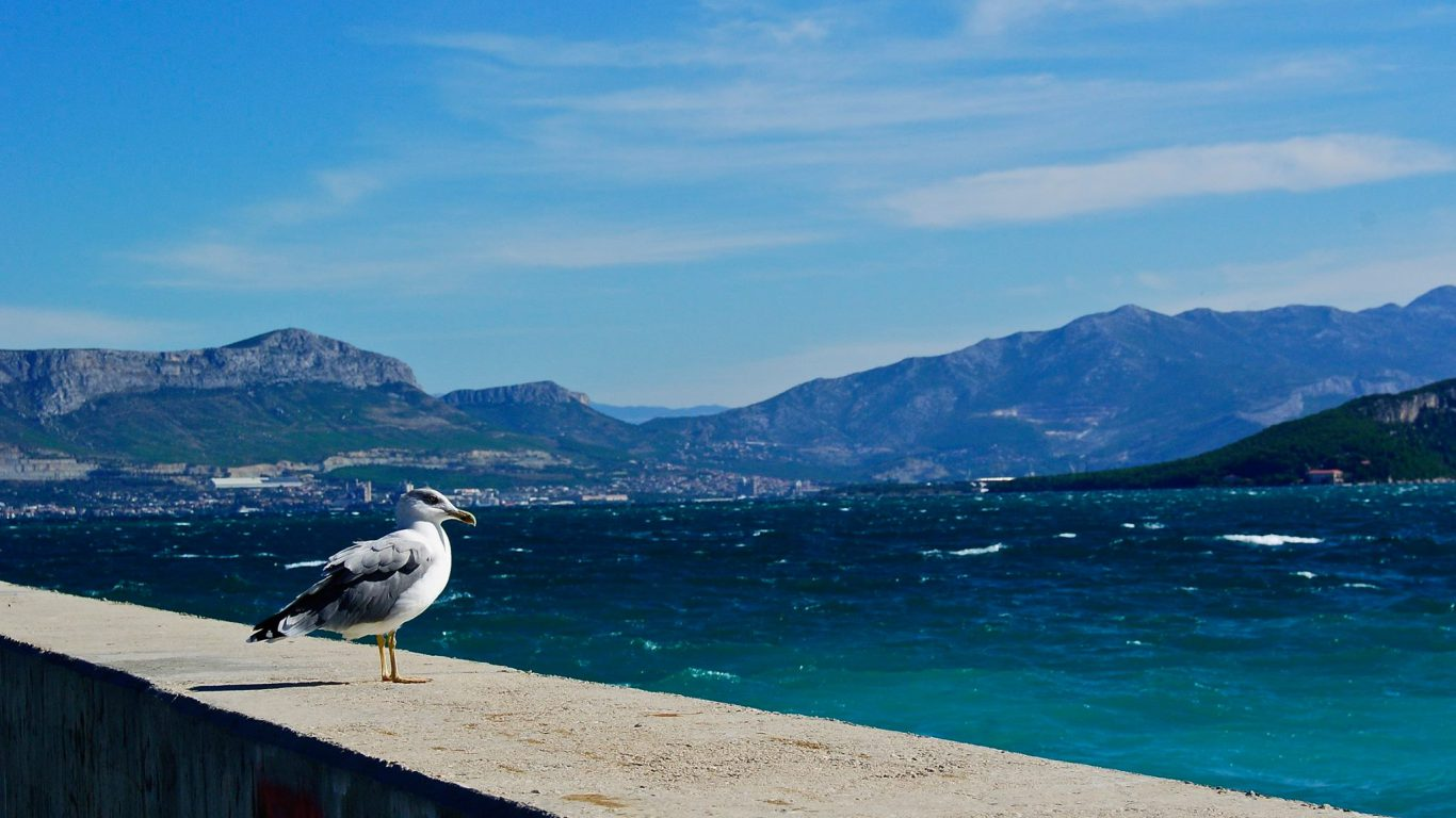 A Day in the Life of Adriatic Seagull