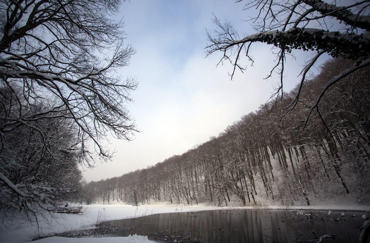 Jankovac Forest