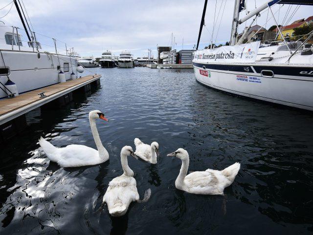 Like croatia croatia times sail with us to luxurious mandalina marina sciox Gallery