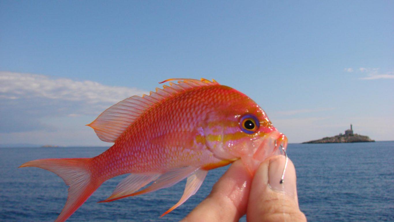 Adriatic Fishes