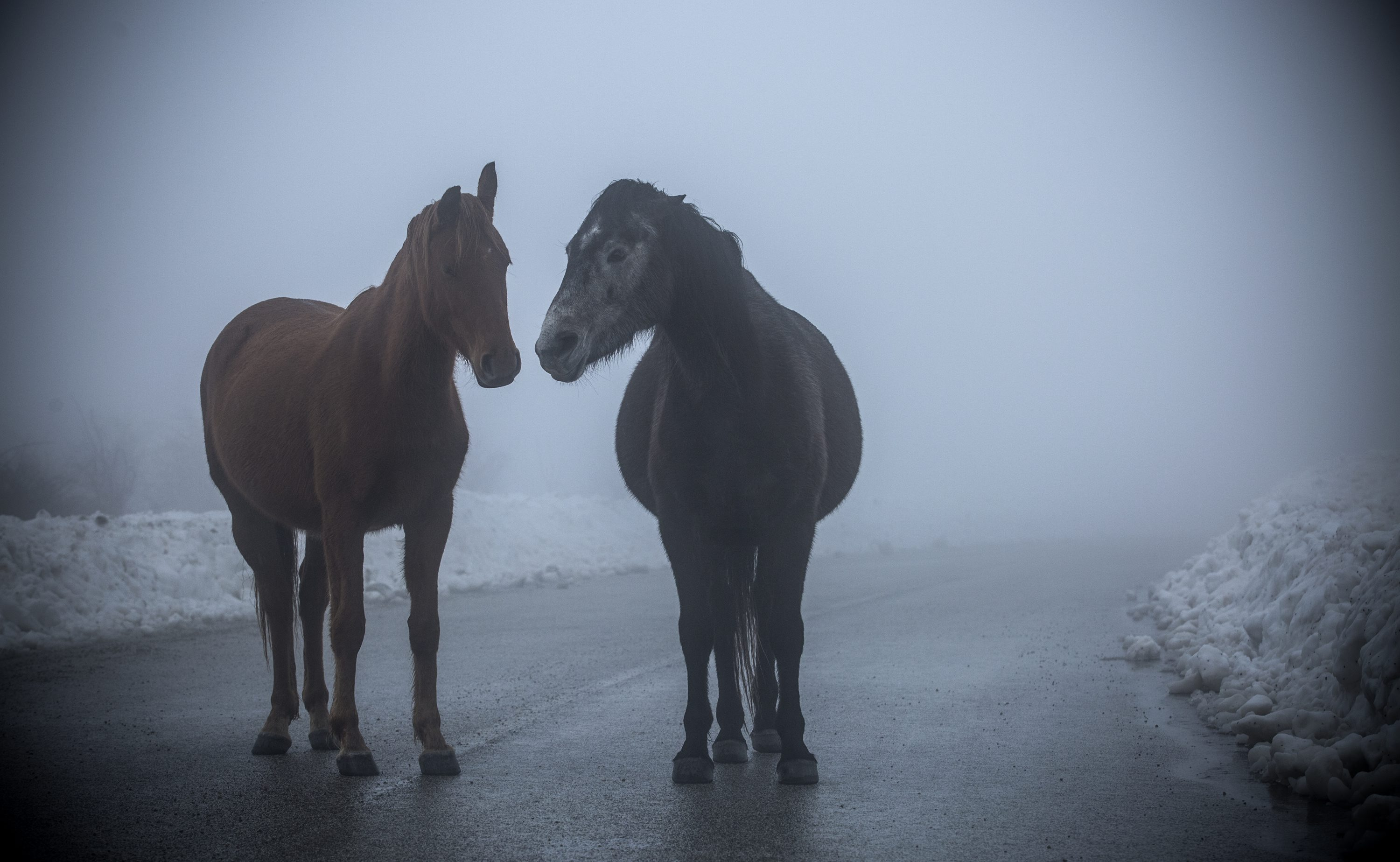 A Mystical Encounter with horses in Kamesnica