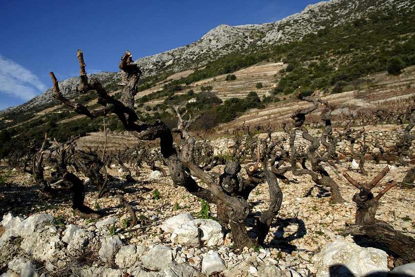 Wine of the week: Markus Dingac Pepejuh 2010