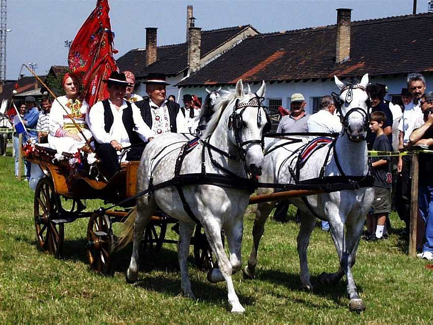 Horses, carriage, Slavonia, Baranja