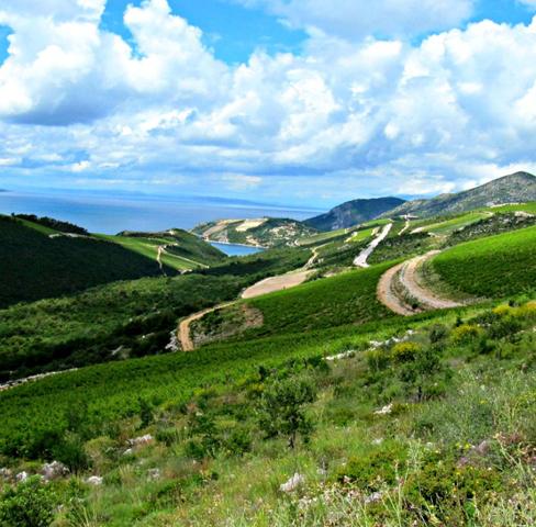 Valley, Dalmatia, Vineyard, Adriatic