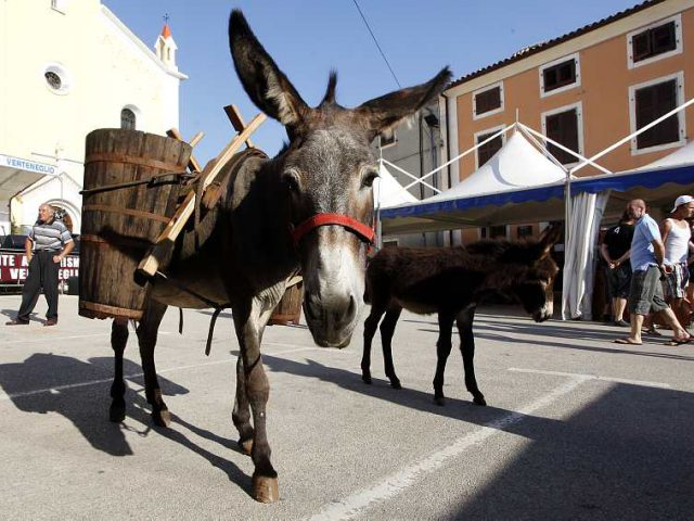 Choco & Wine Donkey
