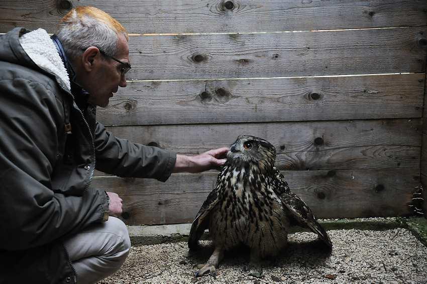 Saving owls around Croatia.jpg2
