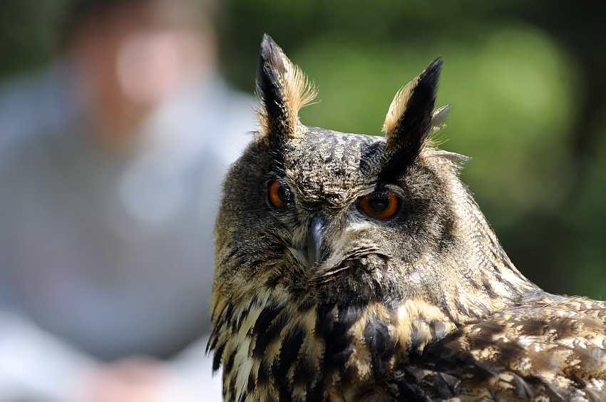 Saving owls around Croatia.jpg3