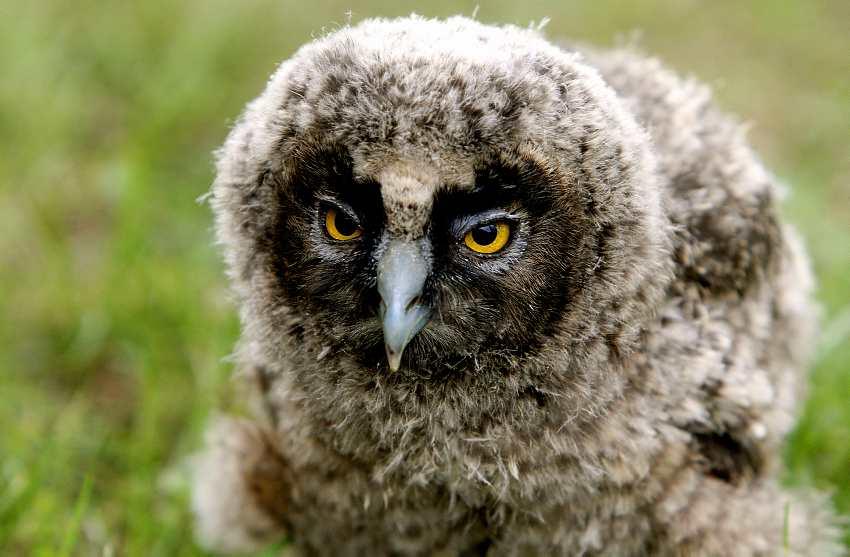 Saving owls around Croatia.jpg4