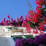 Through the Window of Dalmatia
