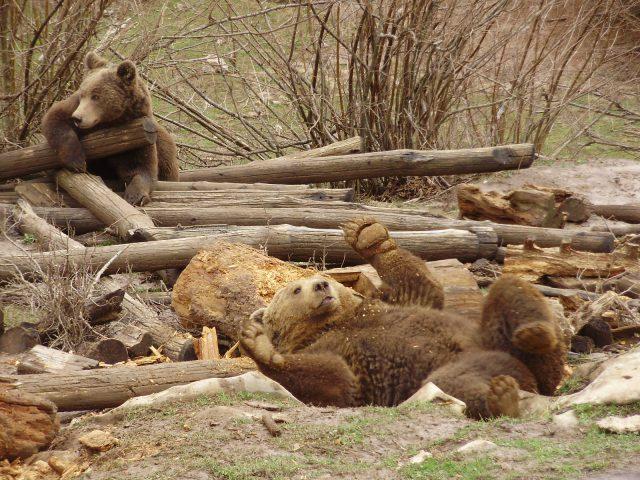 Happy Bear Ending