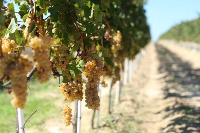 Nadin: Croatian Haven of Wine