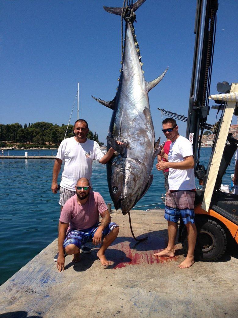 Fisherman Caught the Largest Tuna in Croatia