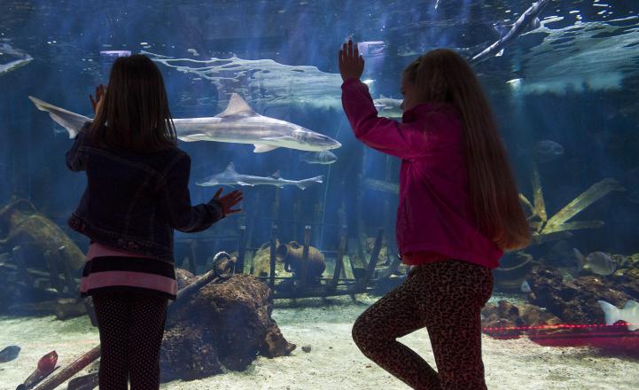 Vranjic Aquarium