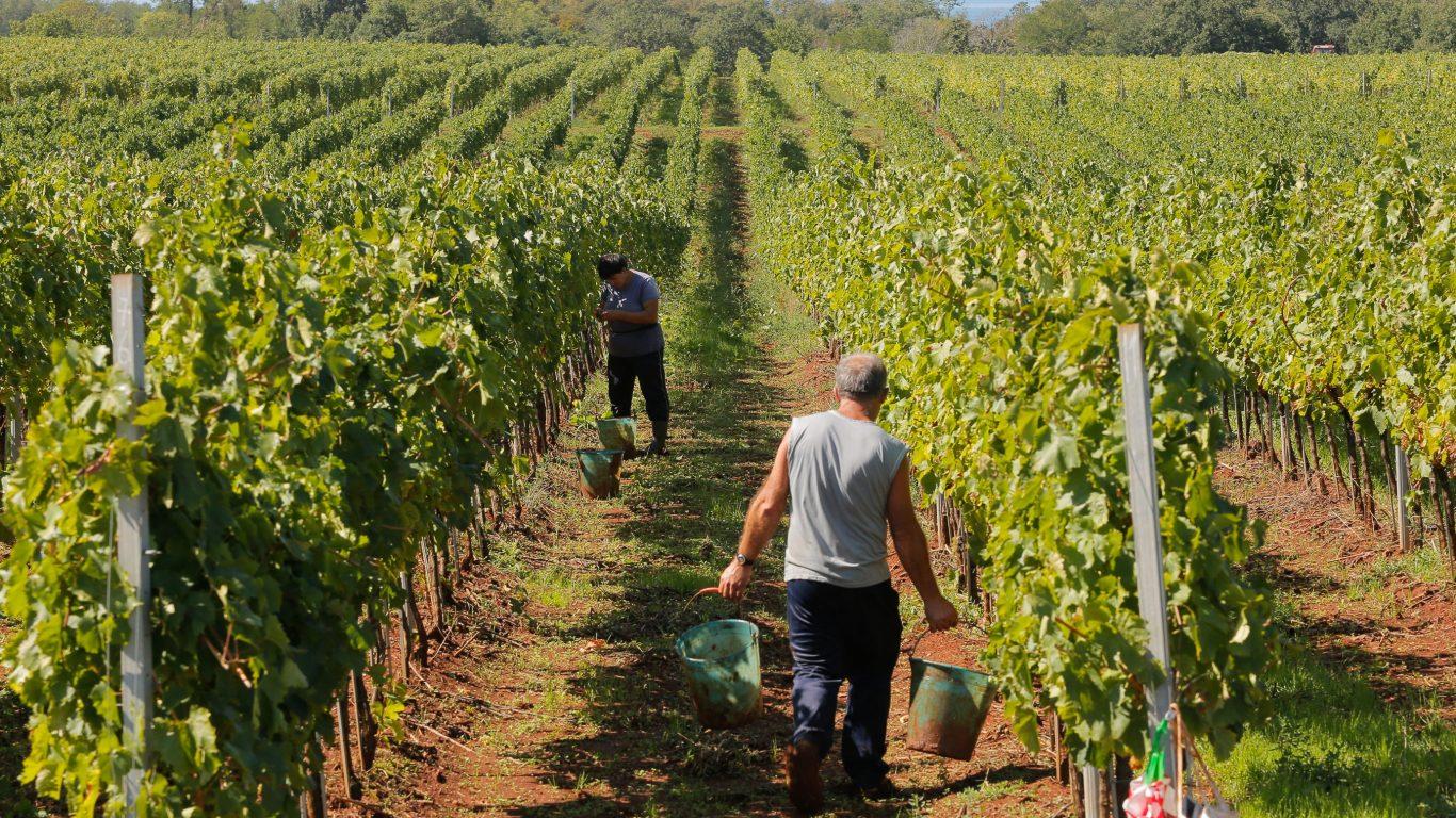 Harvest of Novigrad