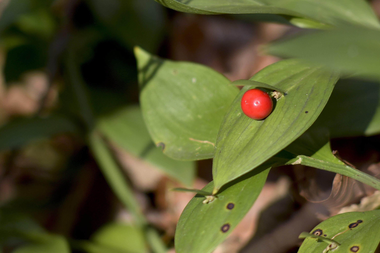 Waking Nature, Flower, Plant