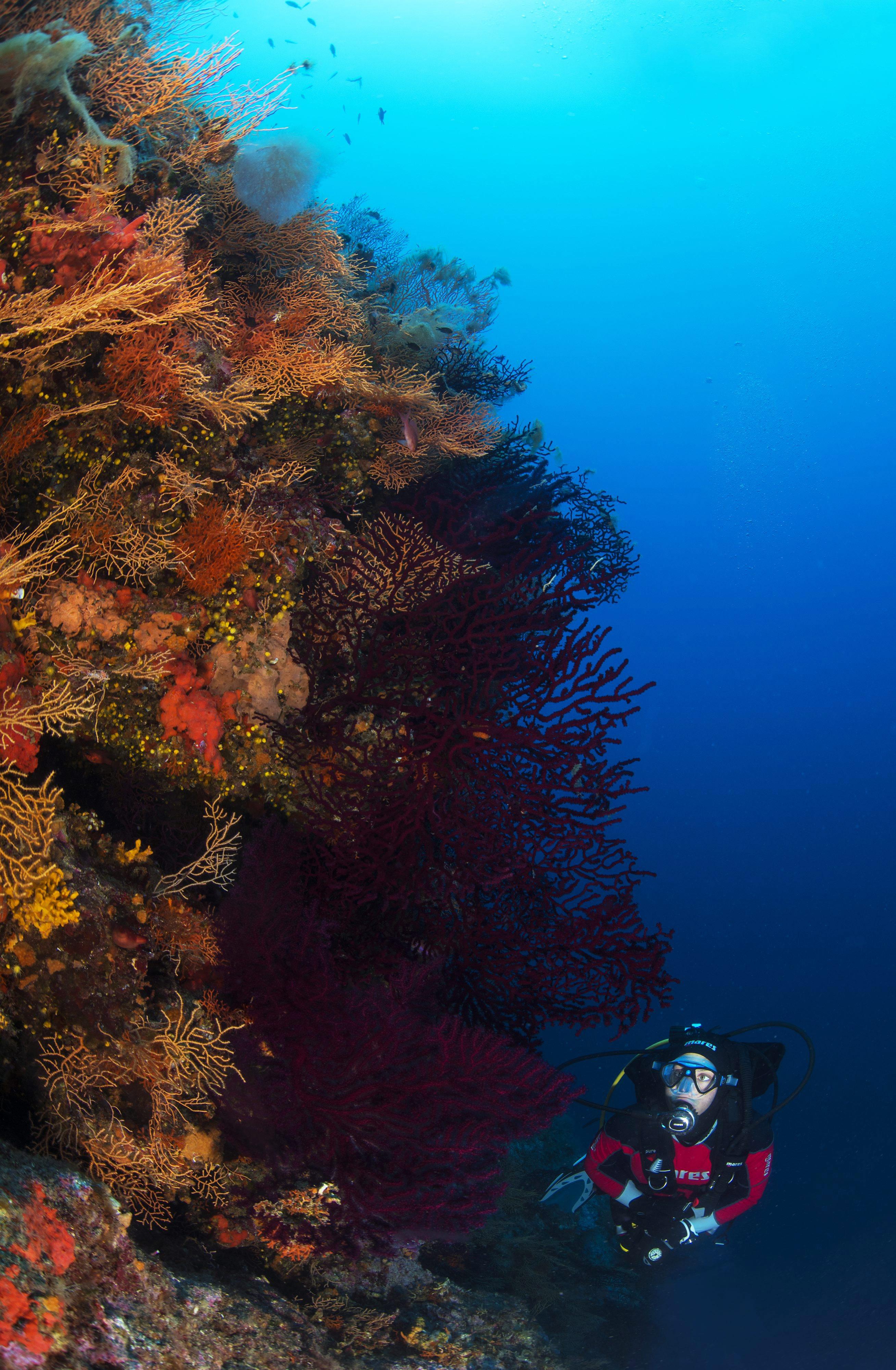 waters of Vis, underwater, vegetation, plants